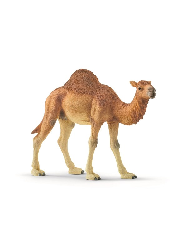Image of   Schleich Dromedary