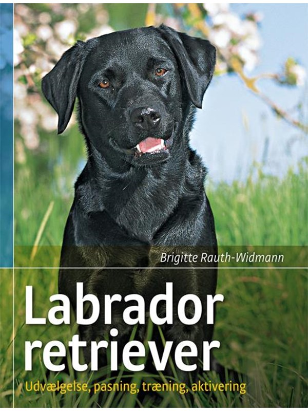 Image of   Labrador retriever